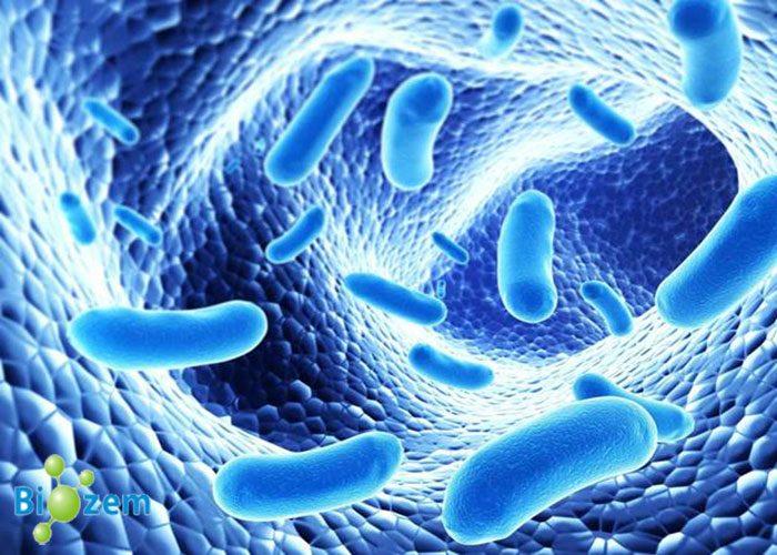 Đại Tràng Lợi Khuẩn Biozem Và Viêm Đại Tràng